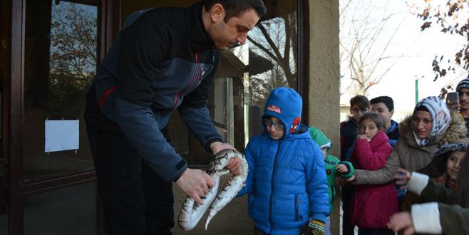 Korkusuz çocuklar piton yılanını sevdi