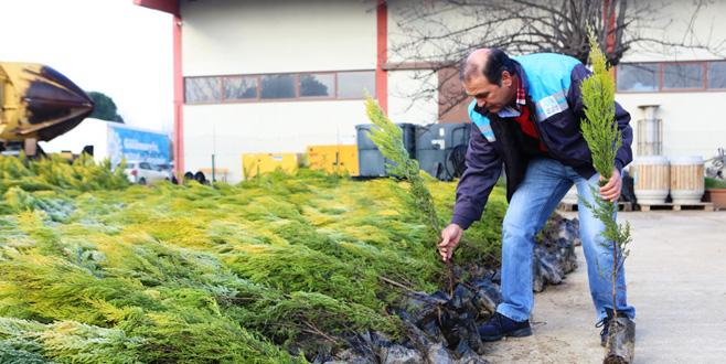 Nilüfer'in geleceği için 25 bin fidan dağıtıldı