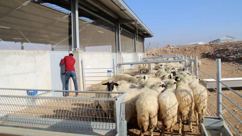 31 bin genç çiftçiye hibe desteği