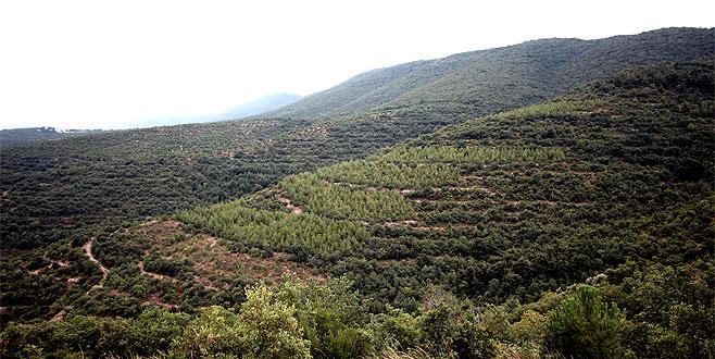 Afrin şehitleri anısına hatıra ormanı