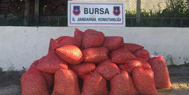 Kaçak 1,5 ton midye yakalandı! Vatandaşa satacaklardı