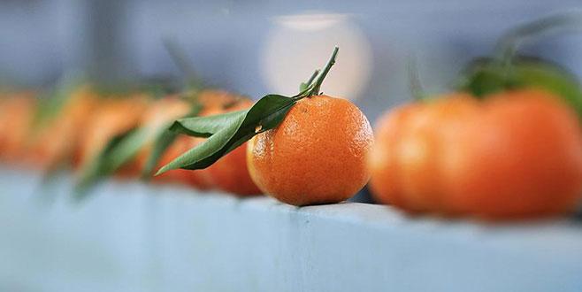 Rusya en çok mandarin aldı