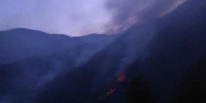 Rize Çayeli'nde ormanda örtü yangını