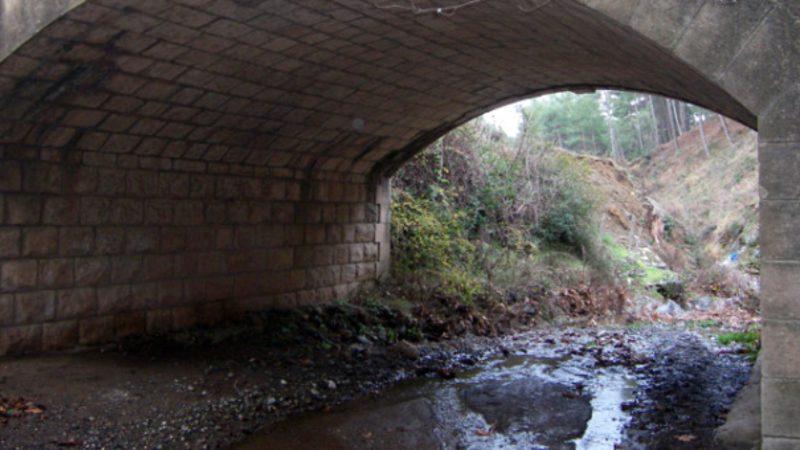 Ünlü yıldızın kızı, köprü altında yaşam mücadelesi veriyor