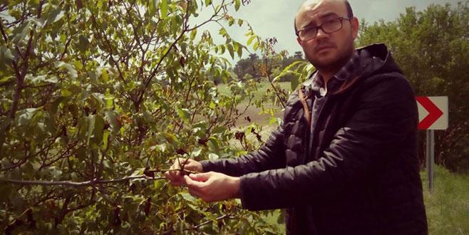Keles'te kırağı ceviz ve meyvelere zarar verdi