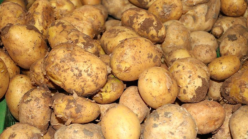 Patateste üretici fiyatı düşüşe geçti