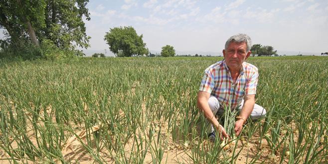 'Sözleşmeli tarım yaygınlaşmalı'