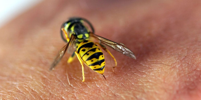 Yazın böceklerden korunmanın yolları