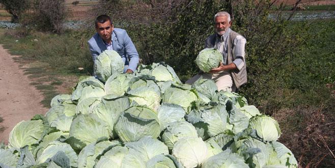 Kışlık sebze üretimi yılın tamamına yayıldı