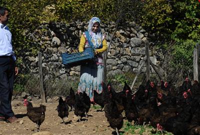 İki tavukla başladı şimdi çiftlik sahibi oldu