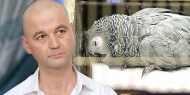 Murat'ın eziyet ettiği papağandan kötü haber geldi!