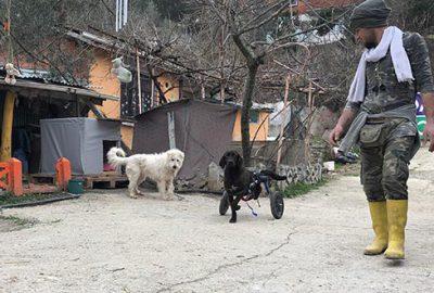 Bacağı kesilen köpek hayatını değiştirdi