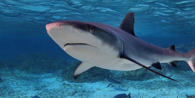 Bunu da gördük! Balıkesir'de köpekbalığına işkence