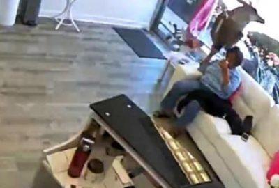 Geyik kuaför salonuna daldı