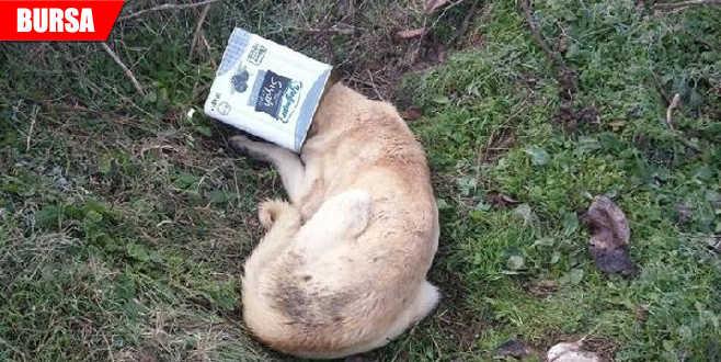 Başı tenekeye sıkışan köpek kurtarıldı