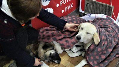 Yağmur ve soğuktan etkilenen üç köpeği battaniyeyle ısıttılar