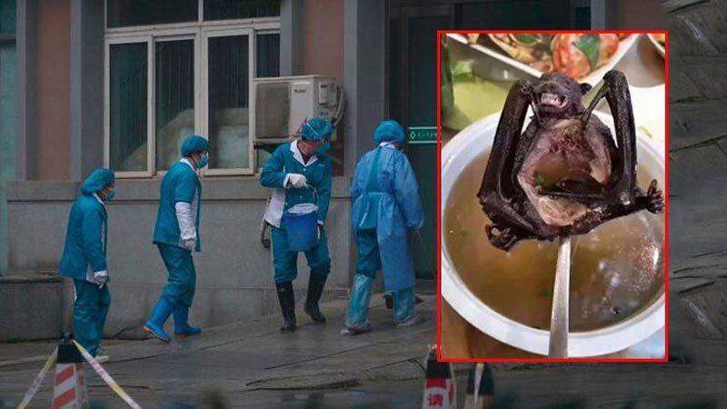 17 kişiyi öldüren virüsün nedeni ortaya çıktı!