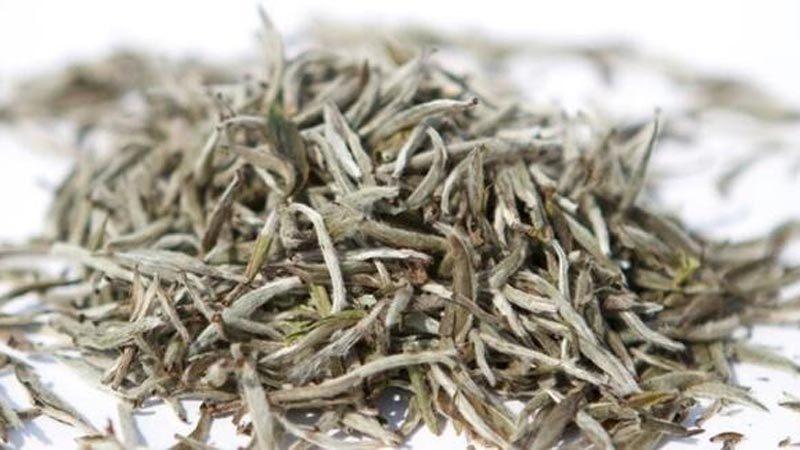 Beyaz çayın mucizevi faydaları
