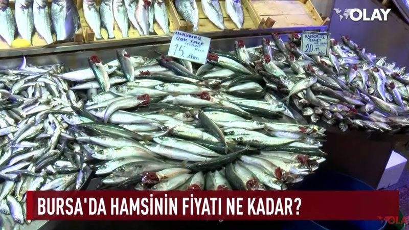 Bursa'da hamsinin fiyatı ne kadar?