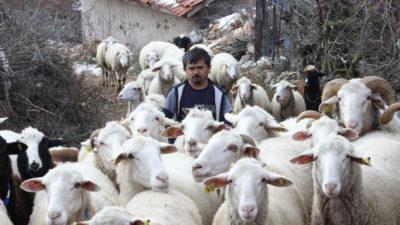 Bursa'da 80 cm'lik çoban