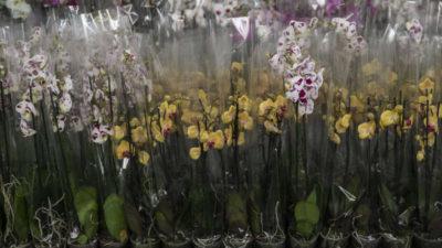 Çiçekçiler 14 Şubat'a hazır