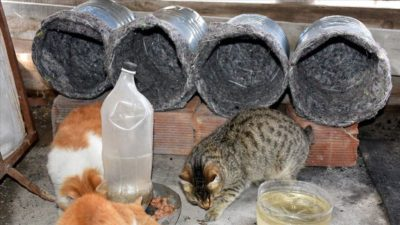 Eski damacana ve battaniyeler kedilere yuva oldu