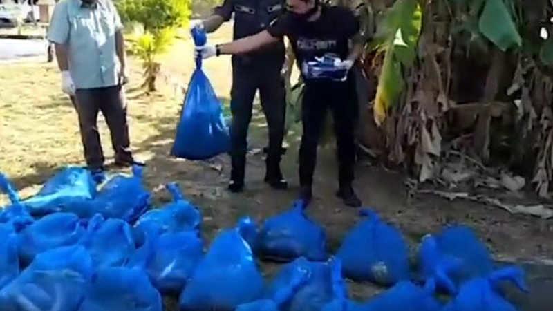 154 kobra yılanı yakaladılar