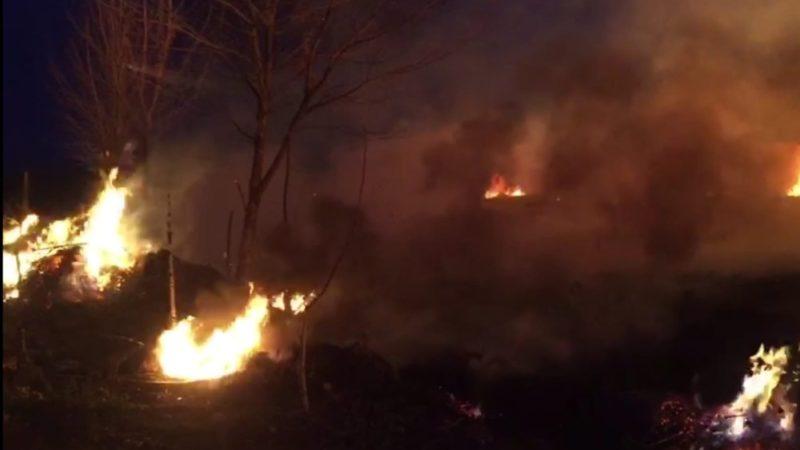 İznik'te sazlık alanda yangın