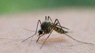 Sivrisineklerden koronavirüs bulaşır mı?
