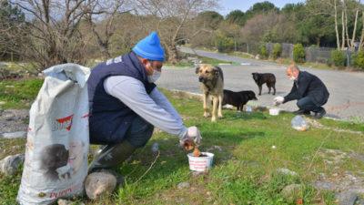Sokak hayvanlarına 'korona' desteği