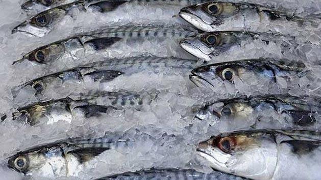 Bakanlıktan dondurulmuş balık uyarısı!