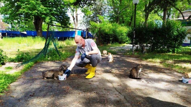 Osmangazi'de sokak hayvanları sahipsiz değil