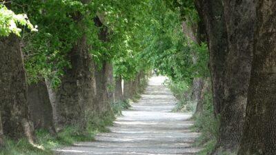 Bursa'daki bu yolda yürümek için Türkiye'nin her yerinden geliyorlar