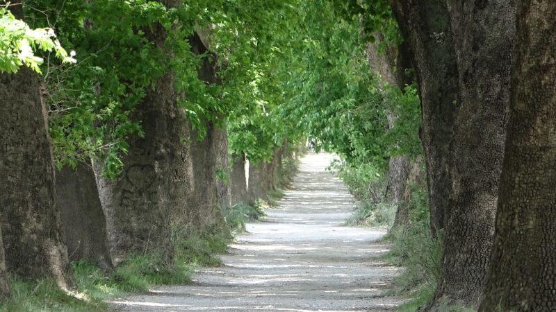 Bursa'da bu yolda yürümek için Türkiye'nin her yerinden geliyorlar