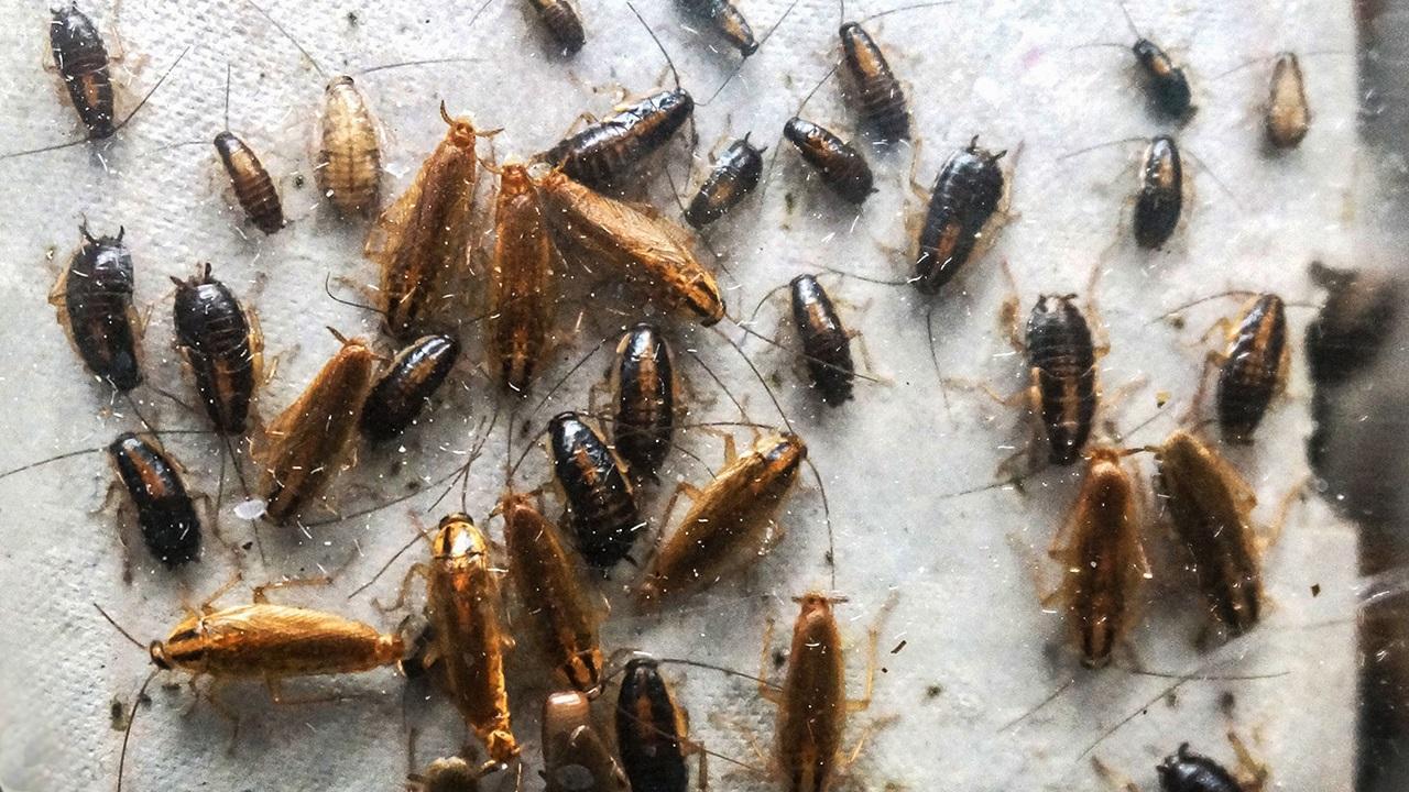 Böcekleri doğal yollarla kovmanın yöntemleri