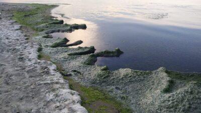 Eğerceliler yetkililere seslendi; Balıkların öldüğü sahilleri temizleyin…