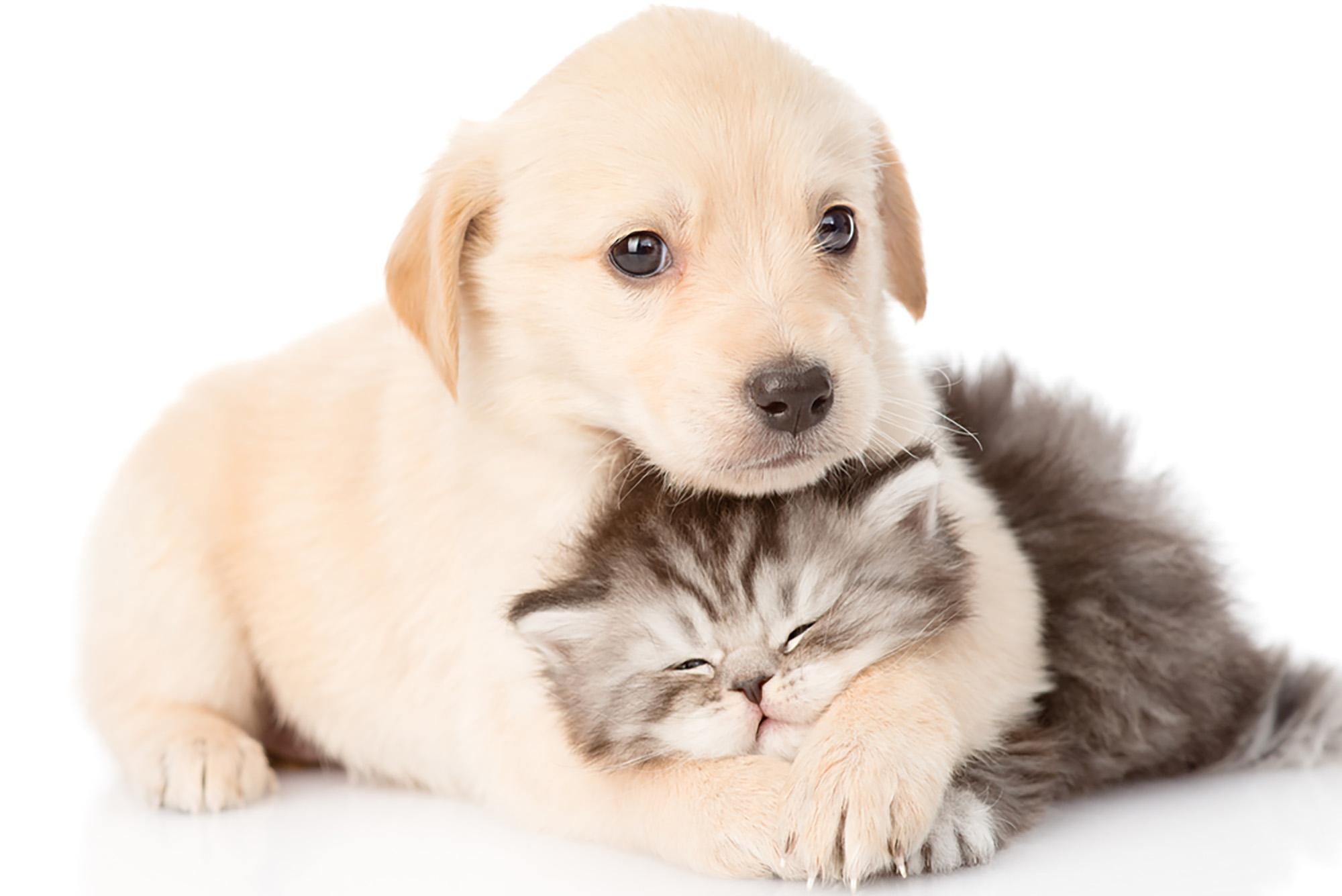 Evcil hayvan beslemenin faydaları ve zararları nelerdir?