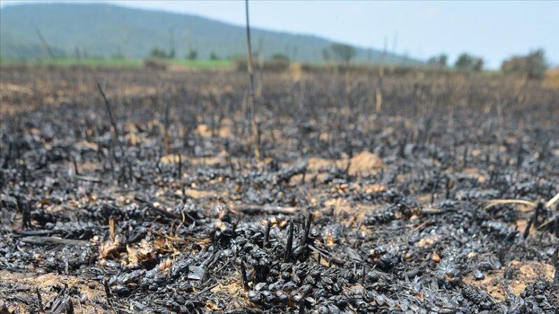Çanakkale'deki orman yangınıyla ilgili flaş iddia