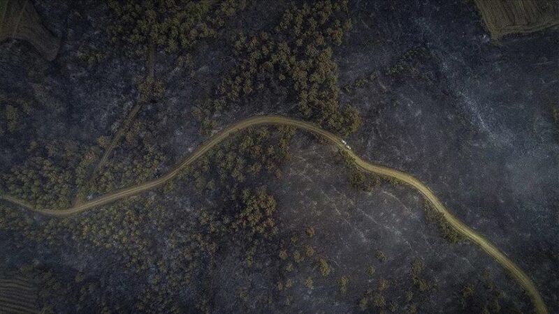 Bakan Pakdemirli'den Gelibolu'daki orman yangınıyla ilgili açıklama