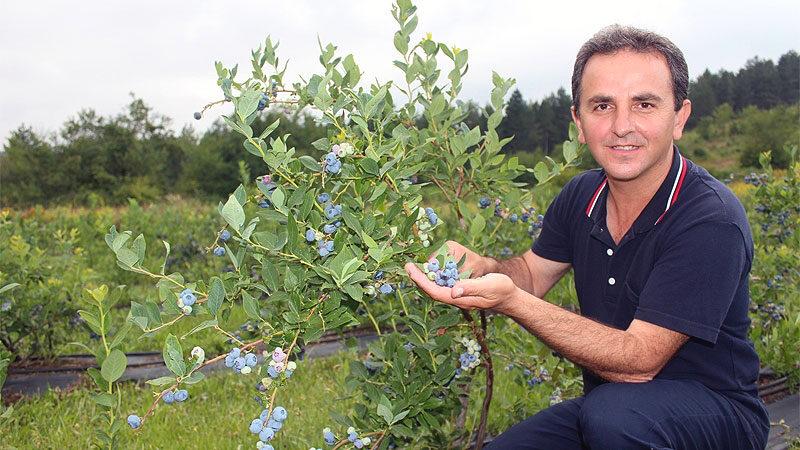 Bursa'da bu meyvenin kilosu 60 lira! Faydası saymakla bitmiyor