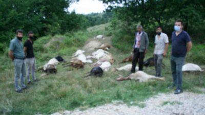 Bursa Yenişehir'de hayvan katliamı