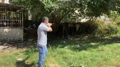 Bursa'da kaçan boğa operasyonu
