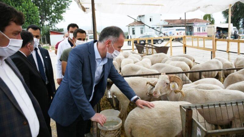 İnegöl'de hayvan pazarında hareketlilik başladı