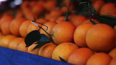 Rusya'ya yılın ilk yarısında narenciye ihracatında artış