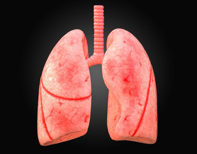 Haftada üç kez tüketin! Ciğerleri baştan sona yeniliyor…