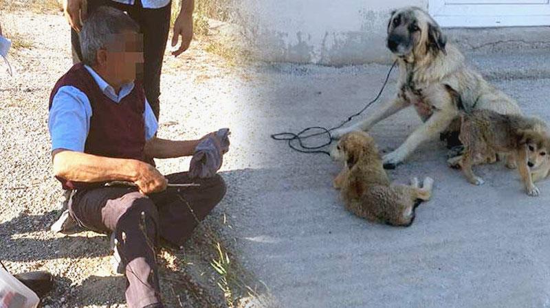 İğrenç olay! Yaşlı adam köpeğe tecavüz ederken yakalandı