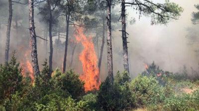 Bursa'da orman yangını! 5 dönüm alan zarar gördü