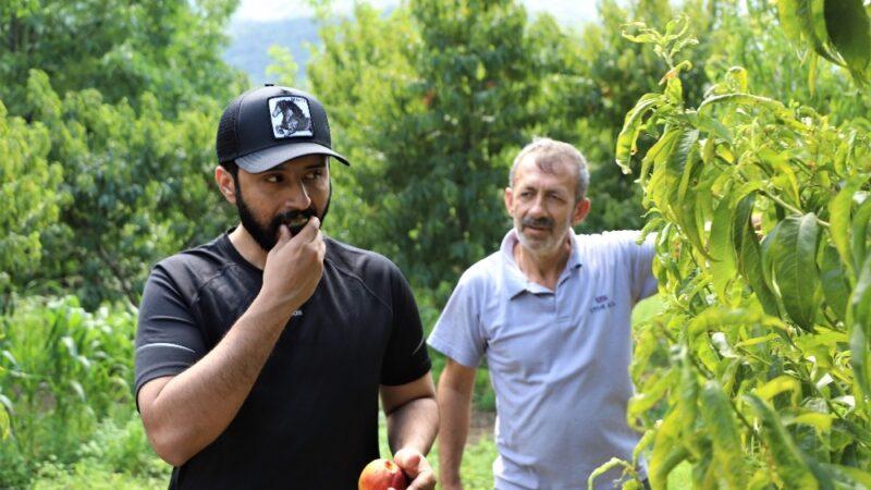 Bu bahçenin meyvesini turistler dalından yiyor