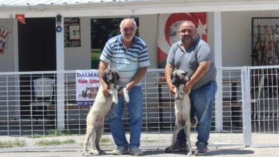 Bursa'da bayramda köpek otelleri yüzde yüz doldu