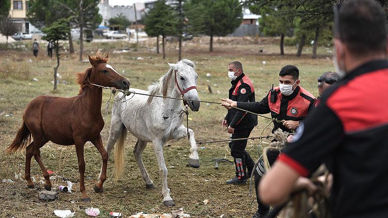 Başıboş atlar yakalandı